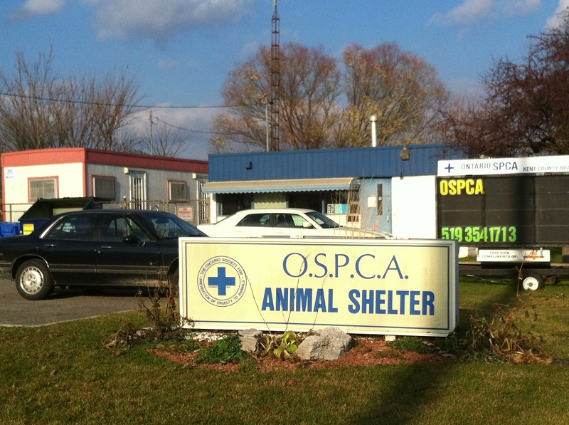 OSPCA shelter located on Park Ave. in Chatham. (BlackburnNews.com File Photo)