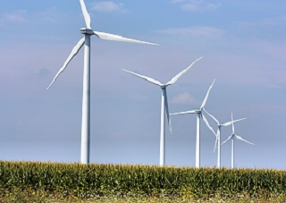 Wind turbines in corn field