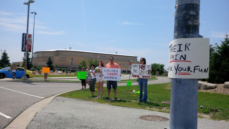 Animal activists protest the Summer Circus Spectacular event at the WFCU Centre, July 2013.
