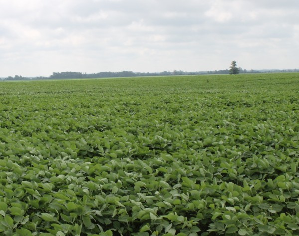 Soybeans - July