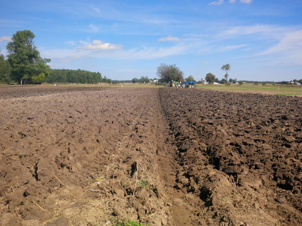 IPM Plowing – Day 3 Results