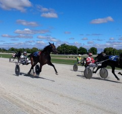 Harness horse racing held at the Leamington Fairgrounds.