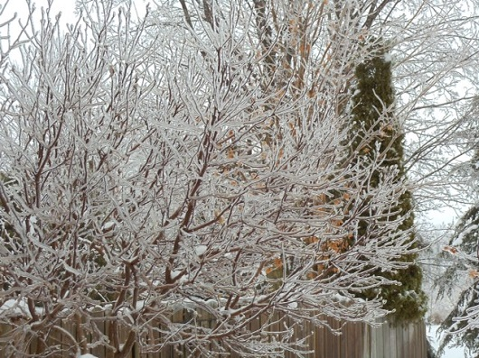 Freezing Rain on trees
