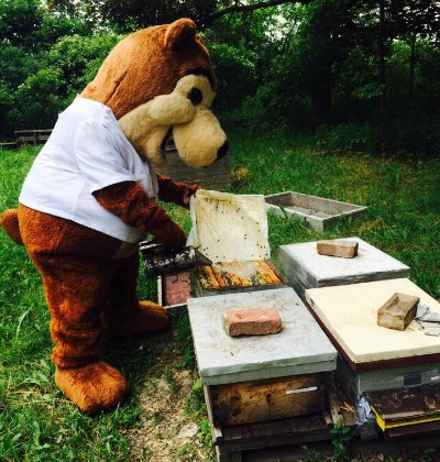 Pierre the Bear work's in Munro Honey's bee yards preparing for Saturday's open house. Photo courtesy of the Munro Honey & Meadery Facebook page.