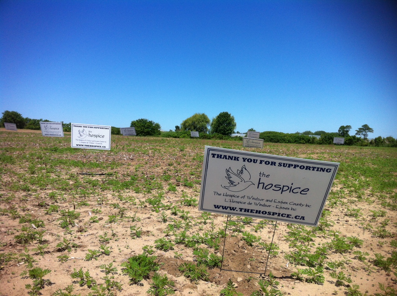 The site of the future hospice in Leamington, June 5, 2014. (Photo by Kevin Black)