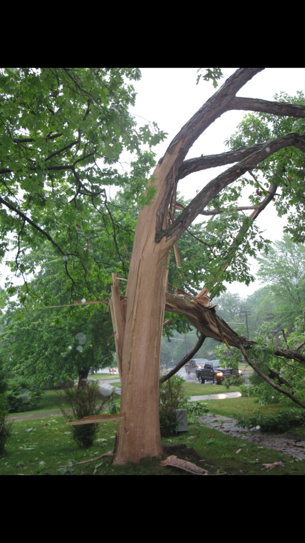 A tree was hit by lightning on Cathcart Blvd. (June 18-2014)