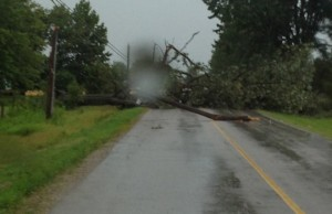 Power lines and trees down in Grand Bend following storm July 27, 2014.  (Submitted photo)