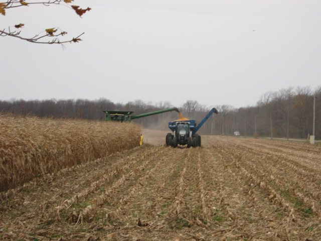 Seed Corn Growers See Positives