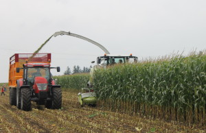 Corn Harvest - Silage