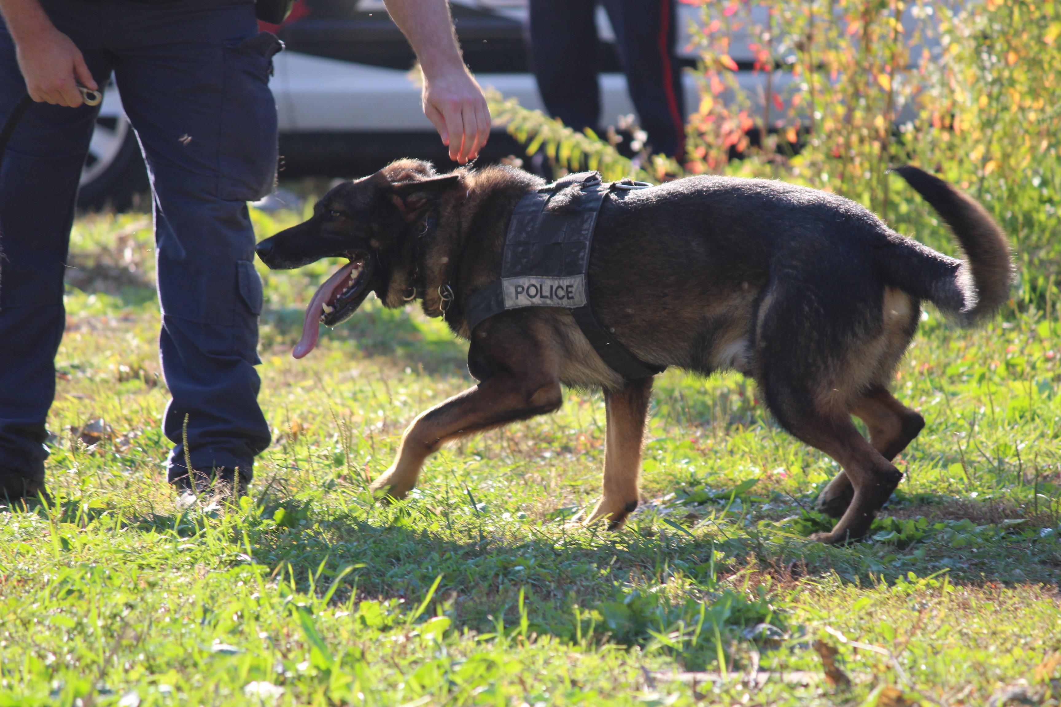BlackburnNews.com file photo of Windsor police K-9 unit. (Photo by Jason Viau)