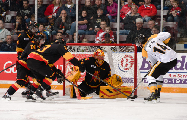Pavel Zacha tries to corral a loose puck against the Bulls Oct. 24, 2014.  (Photo courtesy of Metcalfe Photography)