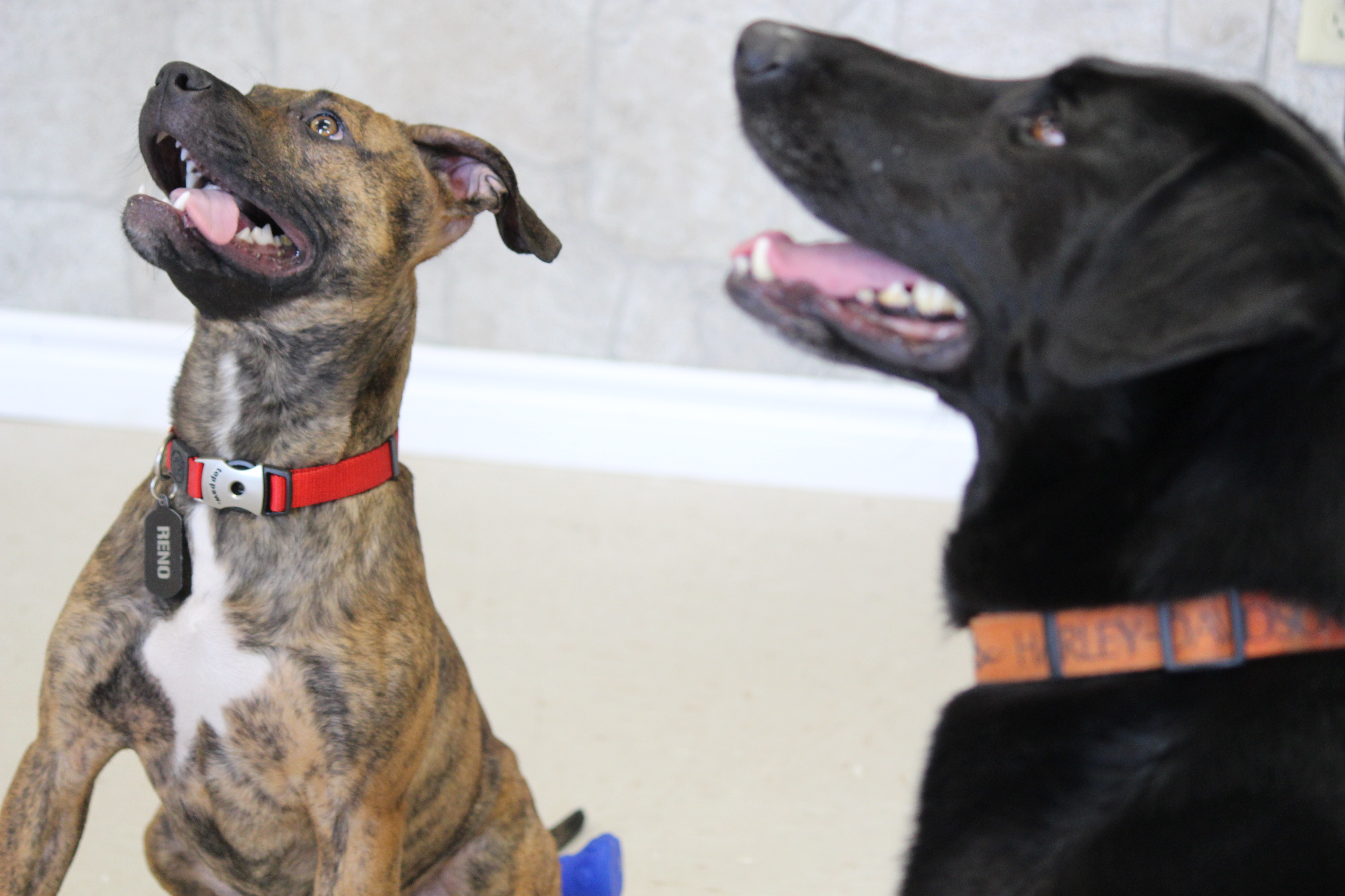 Reno, left, and Jackson, right, were both adopted by Derek at different times after being brought to the Windsor Essex Humane Society for being malnourished, March 26, 2015. (Photo by Jason Viau)