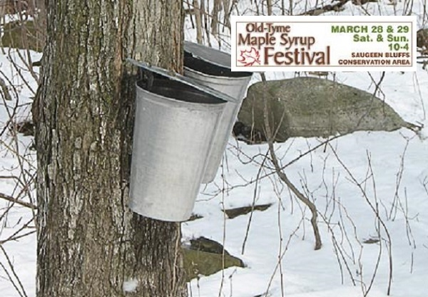 Saugeen Valley Maple Syrup Festival Tomorrow