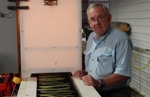 Chatham area farmer Bob Kerr with his asparagus grading equipment May 27 2015 (Photo by Simon Crouch)