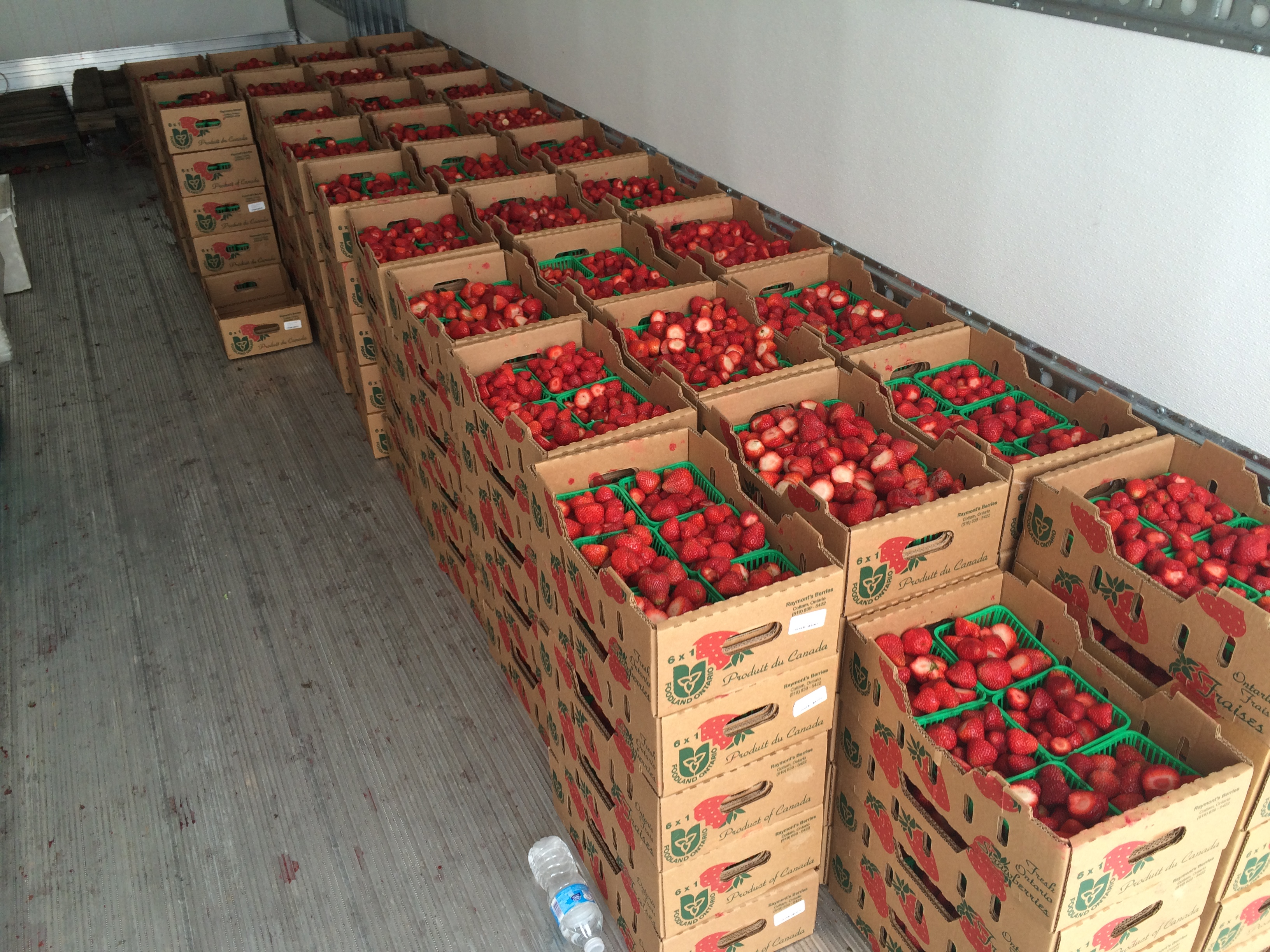 About 200 cases of strawberries are ready to be eaten at the 28th annual LaSalle Strawberry Festival, June 11, 2015. (Photo by Jason Viau)