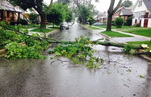 A tree on Dawson St during the June 27, 2015 storm (Photo by Adelle Loiselle)