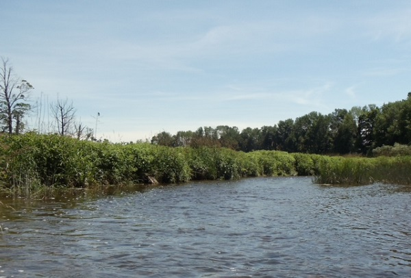 Ausable Bayfield Conservation Creates Successful Partnerships