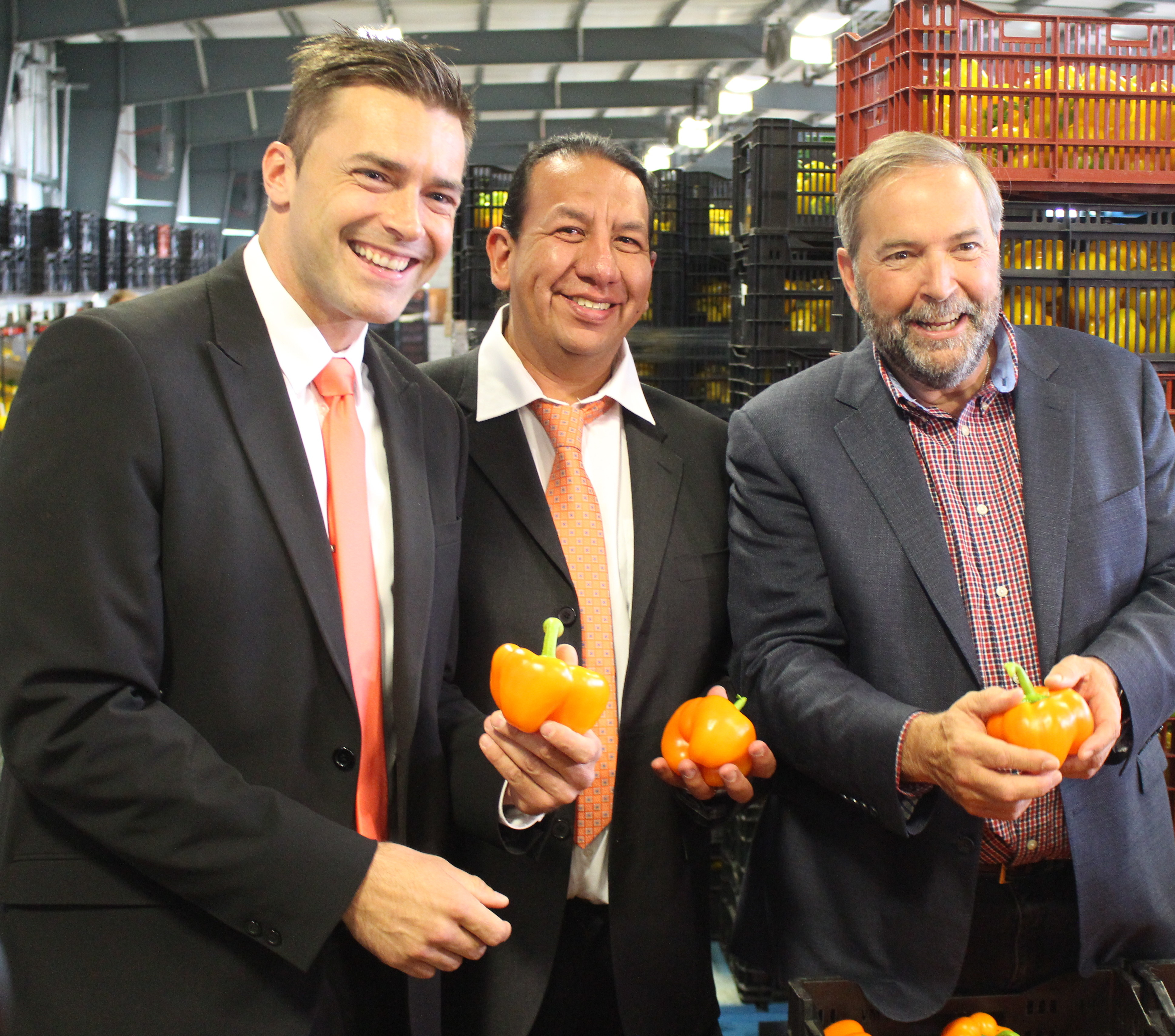 NDP Leader Tom Mulcair visits a pepper farm in Chatham-Kent, July 22, 2015. (Photo by Mike Vlasveld)