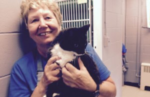 OSPCA volunteer Valarie Knight with Felix one of many cats that is in need of a home. August 31, 2015. (Photo by Simon Crouch)