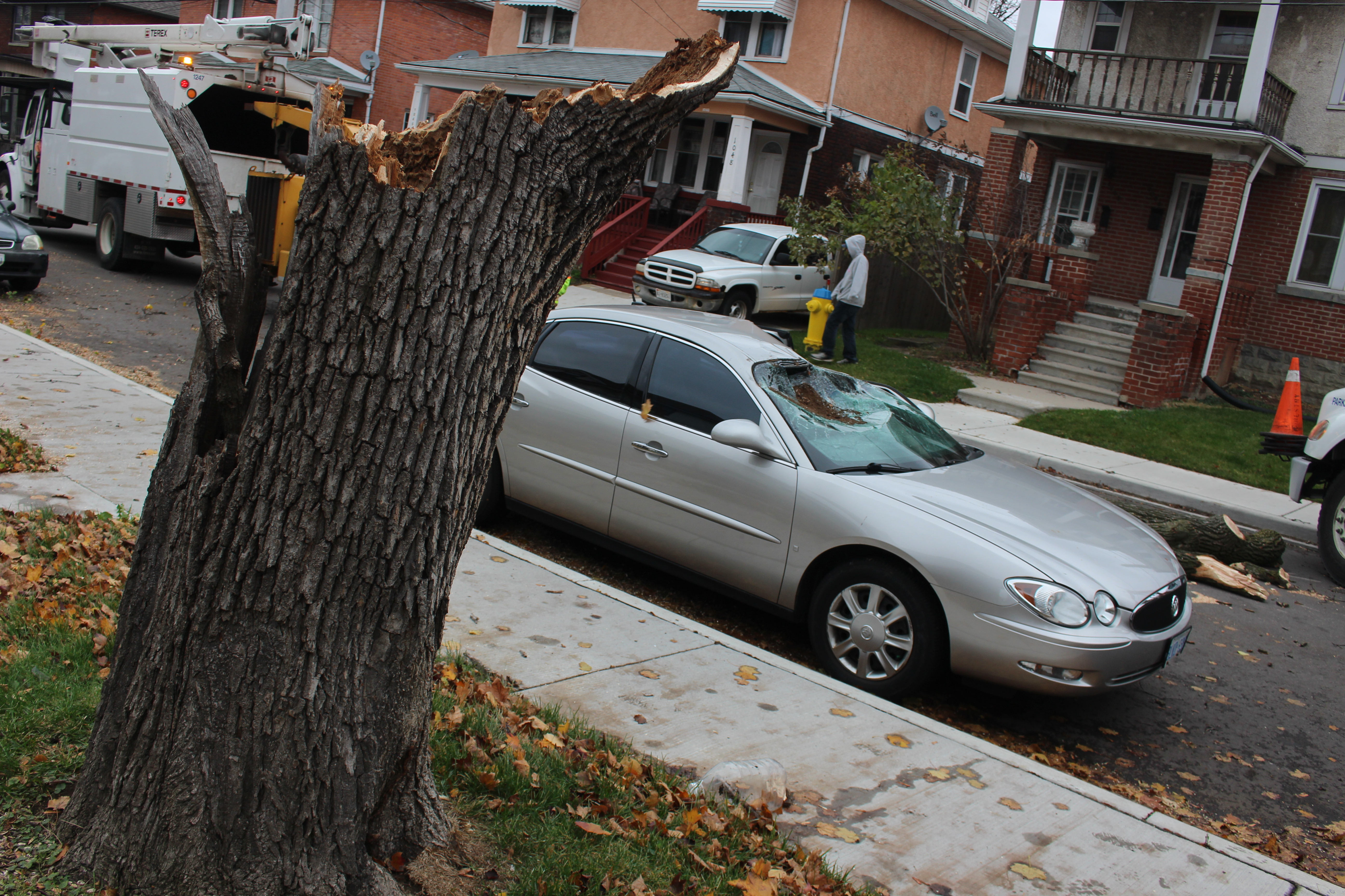 Wind topples a hollow tree onto a parked car on Pellissier St., November 12, 2015. (Photo by Jason Viau)