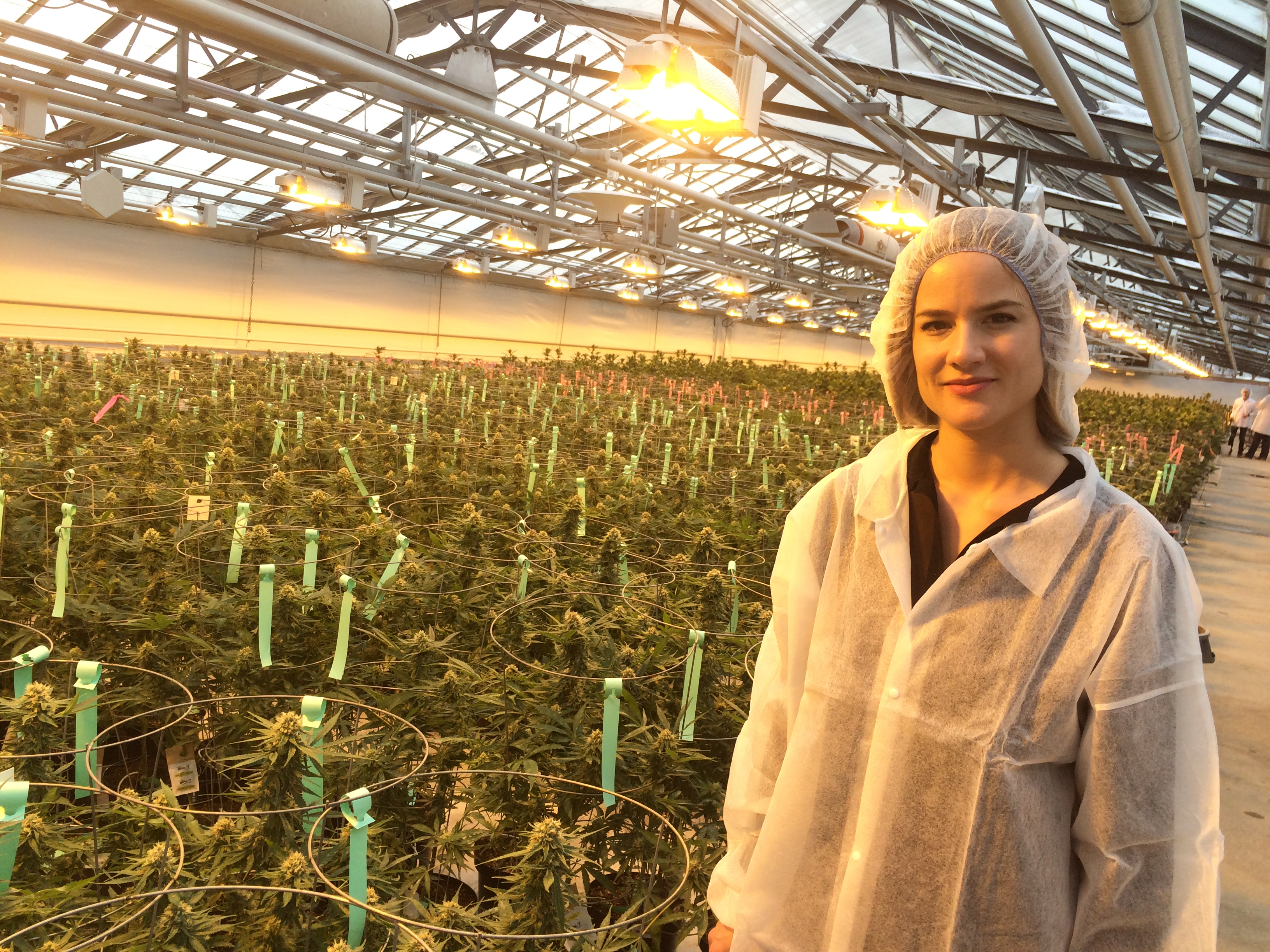 Sarah Dobbin, Patient Care Manager at Aphria, stands next to rows of medical marijuana plants at the company's Leamington greenhouses on February 19, 2016. (Photo by Ricardo Veneza)