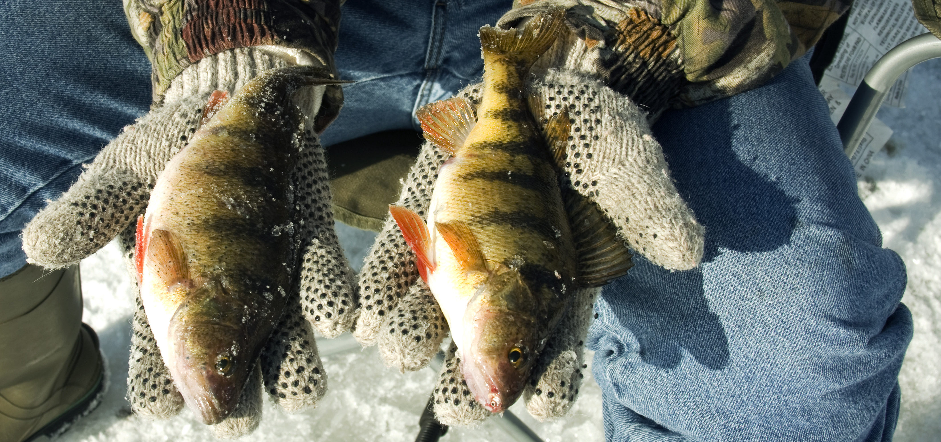 Catch Limits Up For Perch, Walleye In Lake Erie