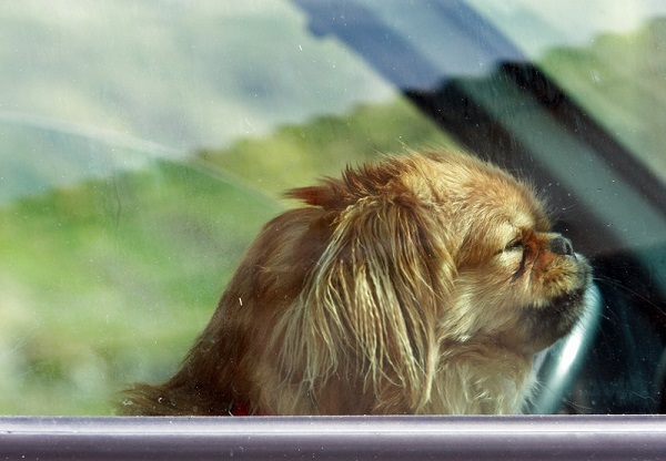 Dog left in hot vehicle, man charged