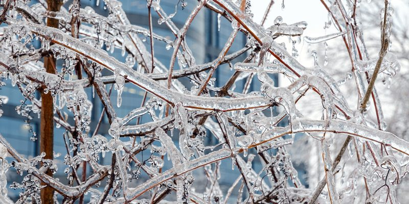Freezing rain on tree branches. Photo courtesy of © Can Stock Photo / Pavels