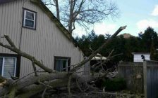 A downed tree narrowly missed Diane Robb's home on Thelma Ave. in Bright's Grove. No one was injured. March 8, 2017 Photo submitted.