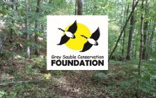 Grey Sauble Conservation Foundation (trees)