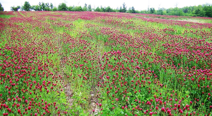 Cover Crop Funding Available