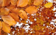 Fall Leaves. (Photo by © Can Stock Photo / rbiedermann)