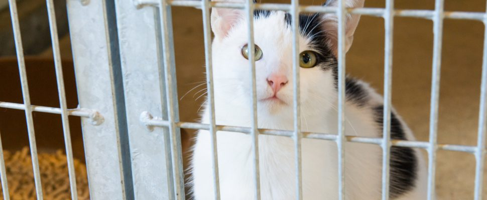 Cat in animal shelter. (Photo by © Can Stock Photo / IvonneWierink)