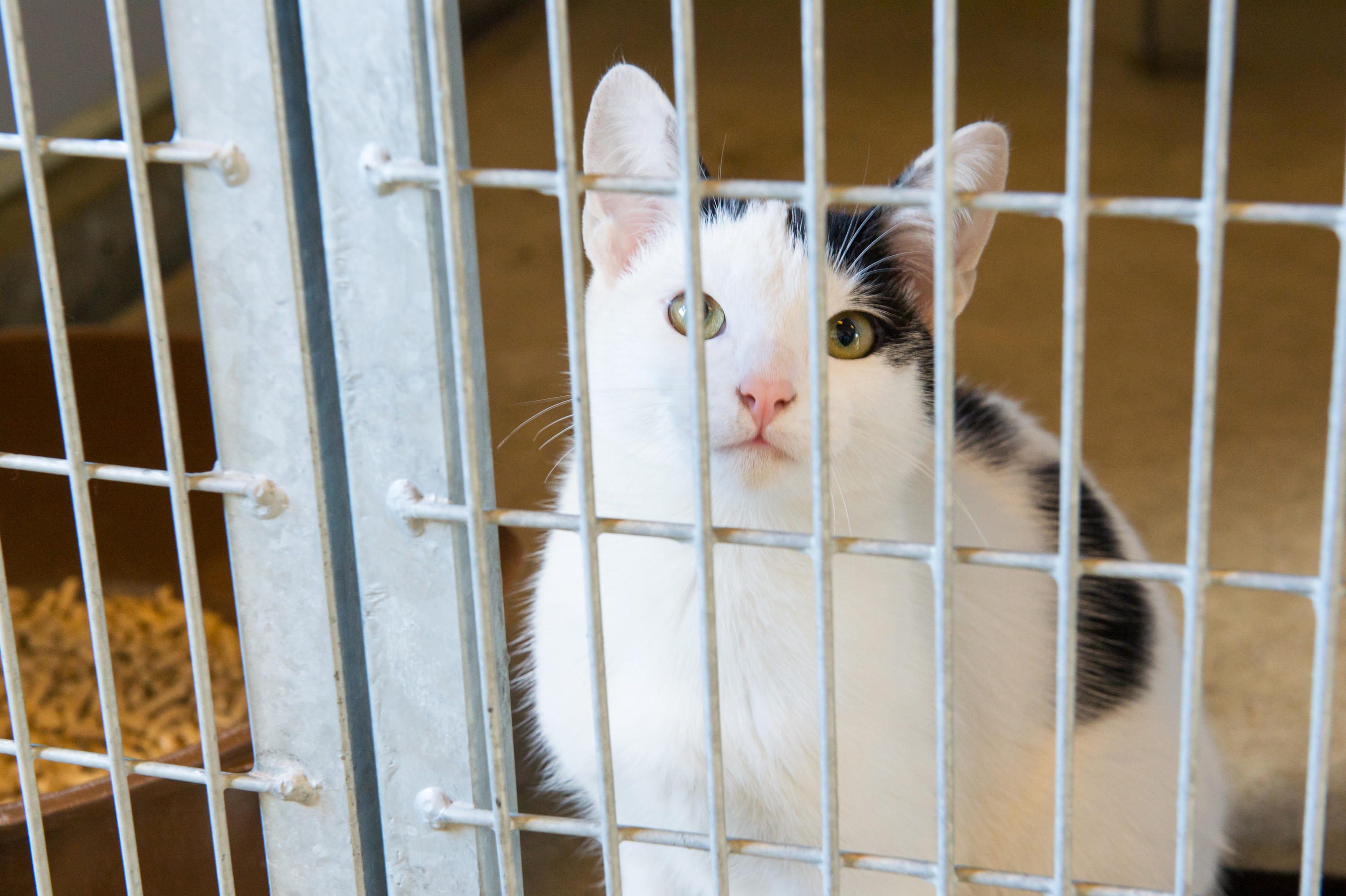 Animal Shelter Campaign Gets Closer To $1.5M Goal
