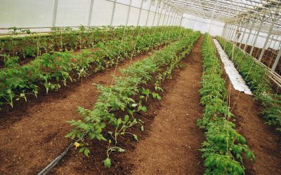 Greenhouses offered incentives to switch to LED technology