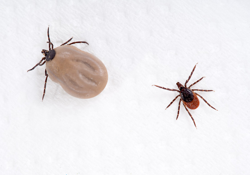 Warm weather bringing back risk of ticks
