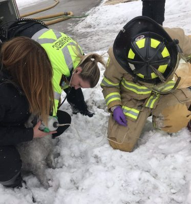 Sarnia Fire and Rescue Saved a Dog From a House Fire - Feb 8/18 (Photo courtesy of Sarnia Professional Firefighters Association via Twitter)