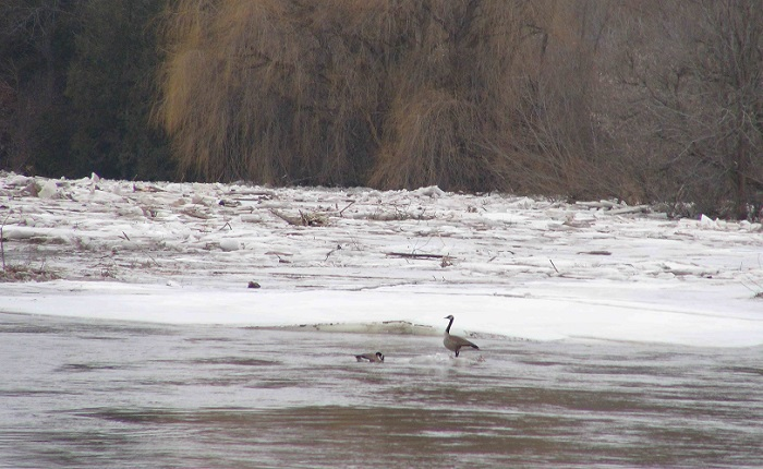 SVCA and Bruce County Still Monitoring Ice Jam Near Paisley