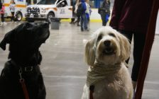 A couple dogs wait for a treat during Sarnia's 13th annual Emergency Preparedness Day at Clearwater Arena. May 11, 2018. (Photo by Colin Gowdy, BlackburnNews)