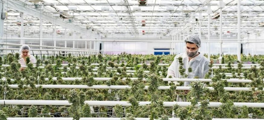 (Photo courtesy of Aphria)