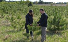 Wade Knight and Azra Fazal of Forests Ontario survey a tree planting operation. (Photo courtesy of Forests Ontario)