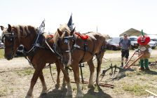 A plowing demonstration at the International Plowing Match 2018 Media Day on September 5, 2018. (Photo by Angelica Haggert)