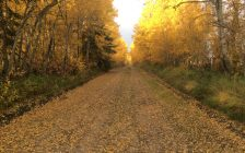 Fall leaves along a country road. Photo courtesy of the Nature Conservancy of Canada