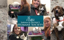 Gracie Wilson with the animals she supported at the Sarnia & District Humane Society.