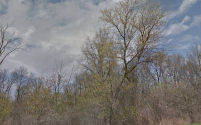 An idea what development in South Cameron Woodlot will look like