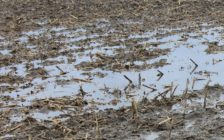 Former Chatham-Kent councillor Leon Leclair said heavy rainfall has pushed back crop-planting dates close to one month. (File Photo)
