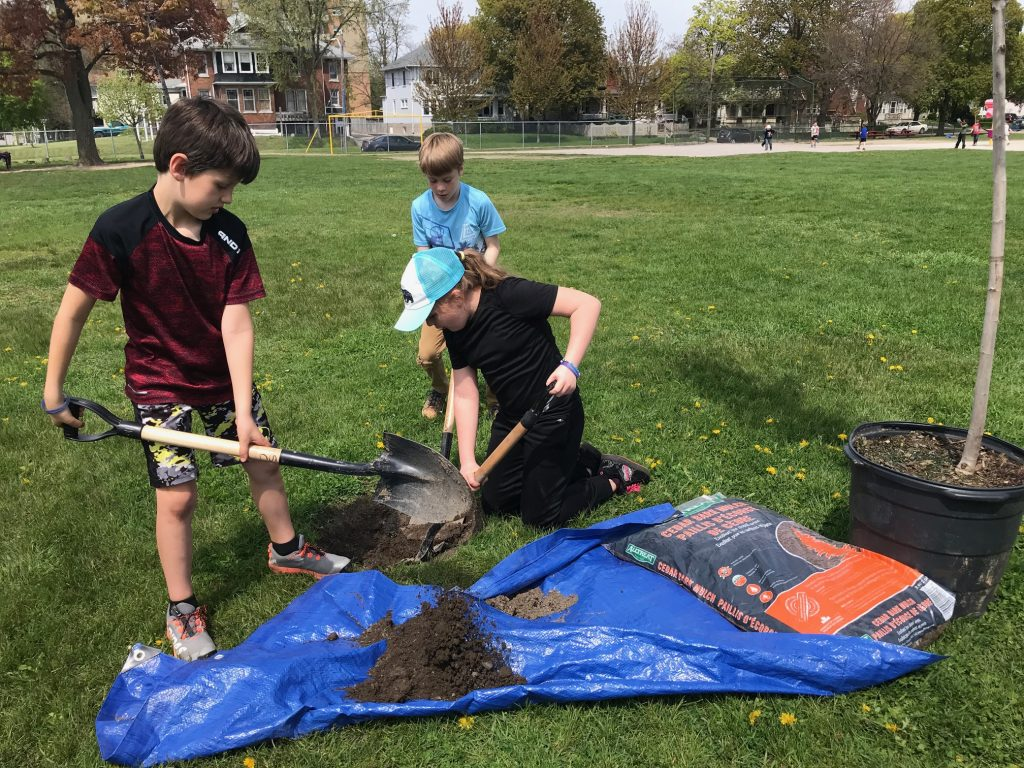 Students at Sarnia's London Road Public School plant trees. May 16, 2019 Photo by Melanie Irwin