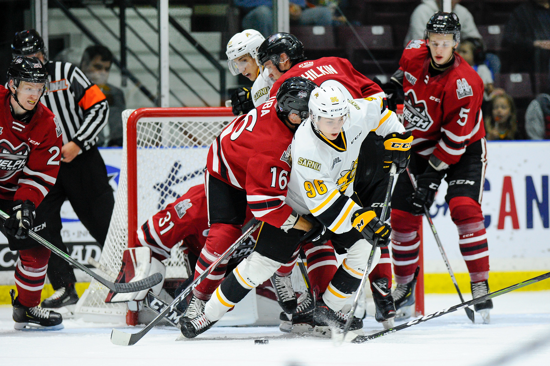 Three Sting players on preliminary Central Scouting list