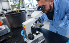 A man uses a microscope to analyse cannabis. Photo courtesy of Fanshawe College.