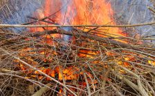 Small brush fire. © Can Stock Photo / Wirepec